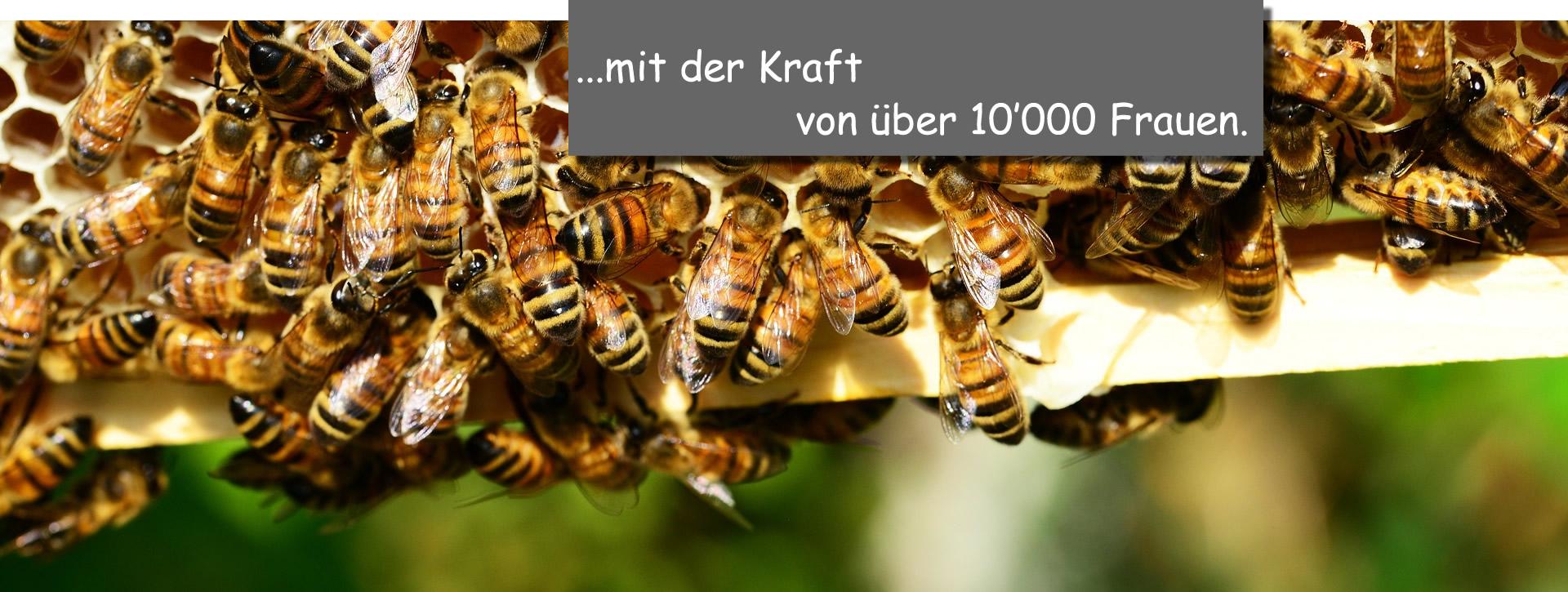 viele_Bienen_fertig